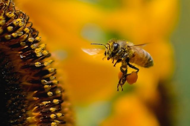 行か 刺され 病院 ない た 蜂 に に