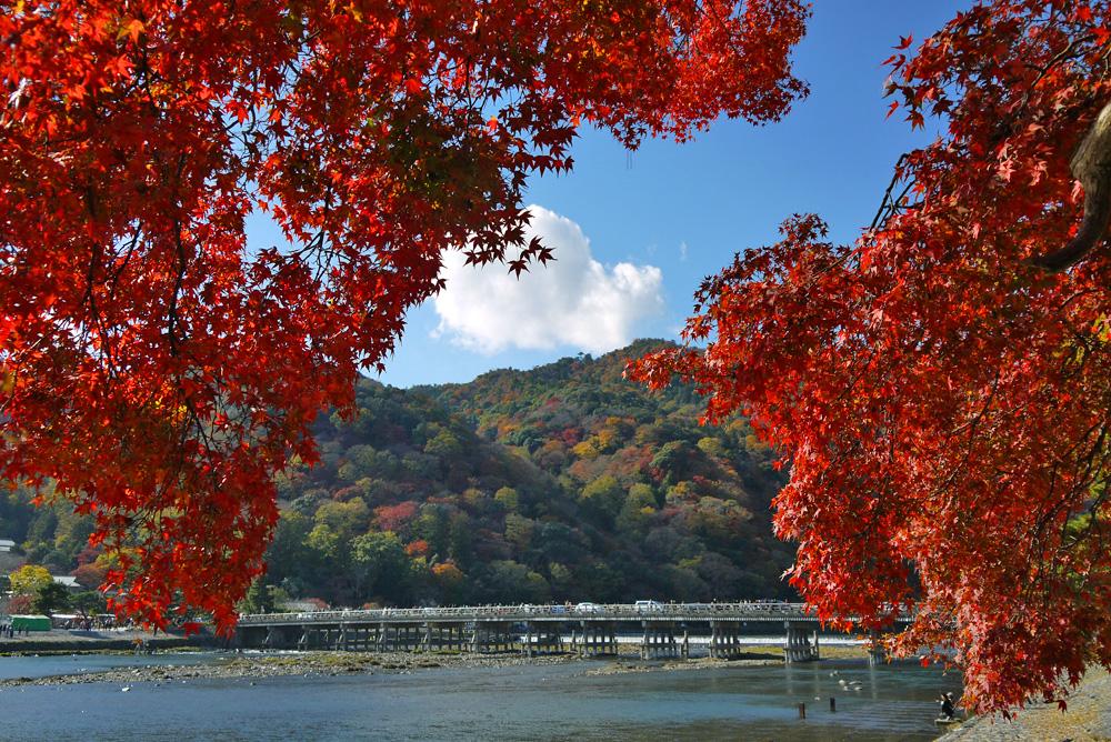 京都嵐山へ紅葉観光に行く人必見!時期はいつ?混雑避けるには?